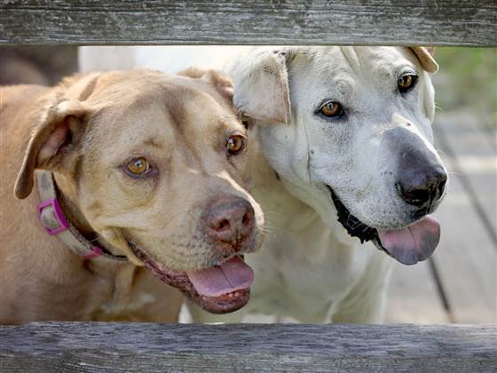 www.lifewithdogs.tv